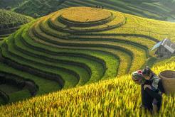 Infos pratiques au Vietnam